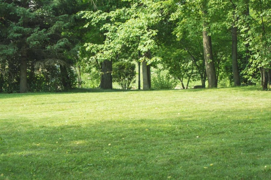 design a native plant garden- yard with sun and shade on law, mature trees in background