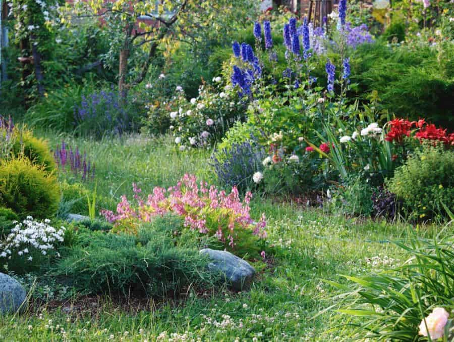 design a native plant garden- garden path with shrubs, ground cover, and flowers, all varying scale and textures