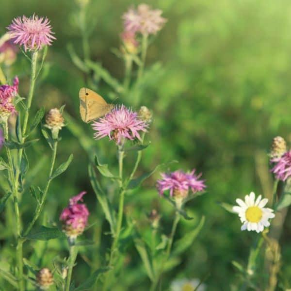 Design A Native Plant Garden   Easy Starter Tips