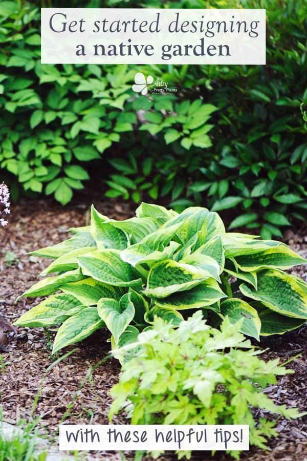 design a native plant garden-native plants in shady garden area