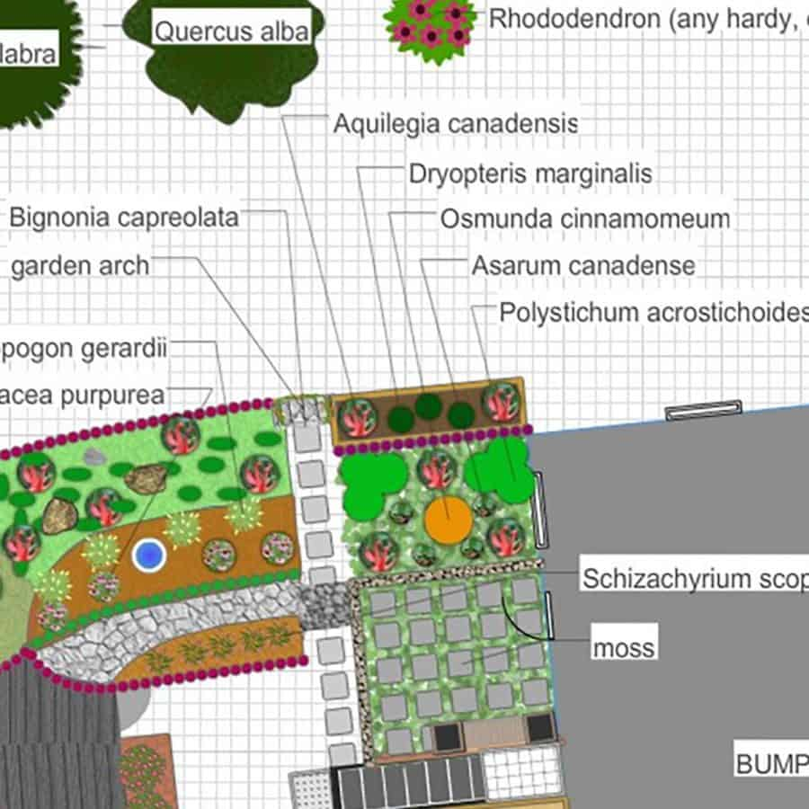 drawing of native plant garden design shade garden with ferns