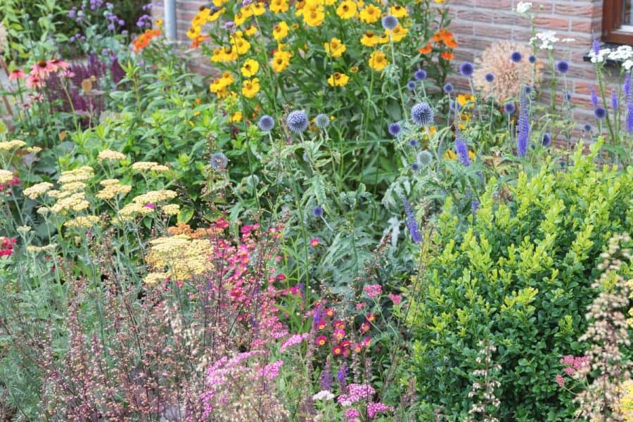 Native Gardening- garden with assorted native plants like thistle, coneflower, black-eyed-susans