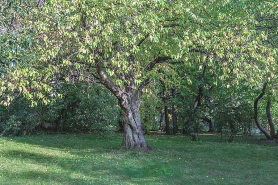 Native Gardening- medium-sized tree in yard, giving plenty of shade.