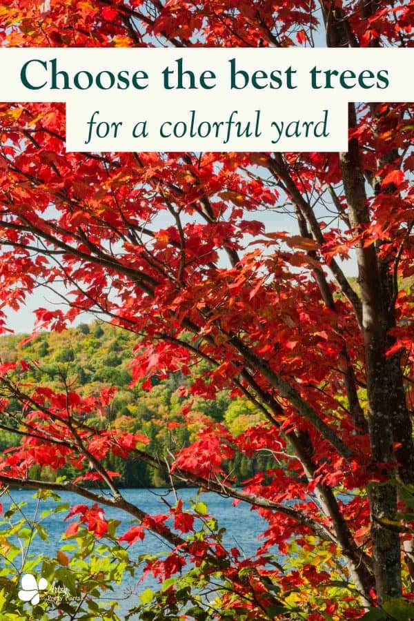 Fall Trees for Color