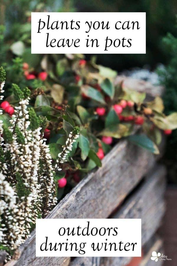 Winter Plants For Pots